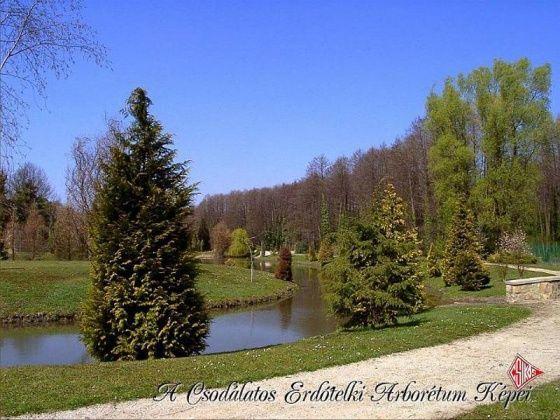 Arborétum, Erdőtelek